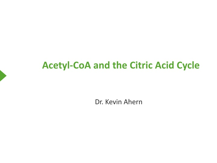 acetyl coa and the citric acid cycle