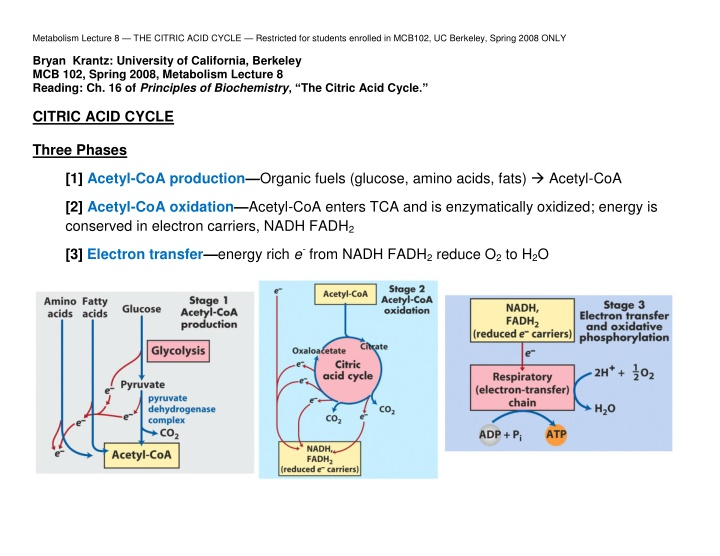metabolism lecture 8 the citric acid cycle