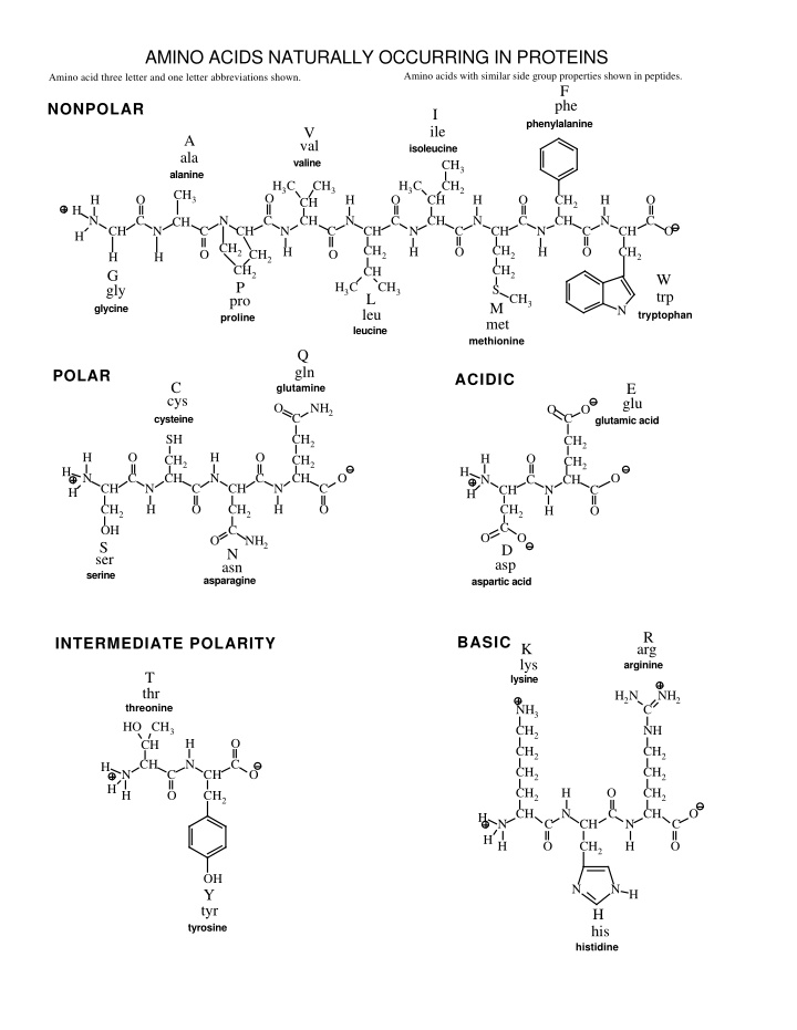 amino acids naturally occurring in proteins amino