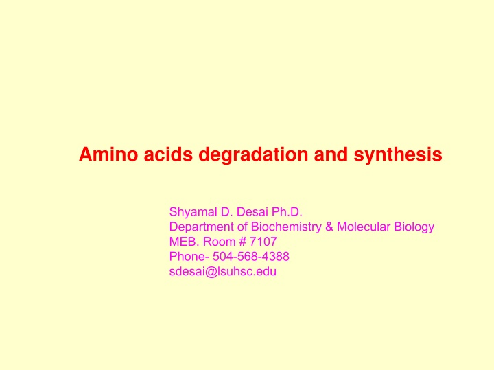 amino acids degradation and synthesis
