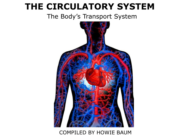 the circulatory system the body s transport system