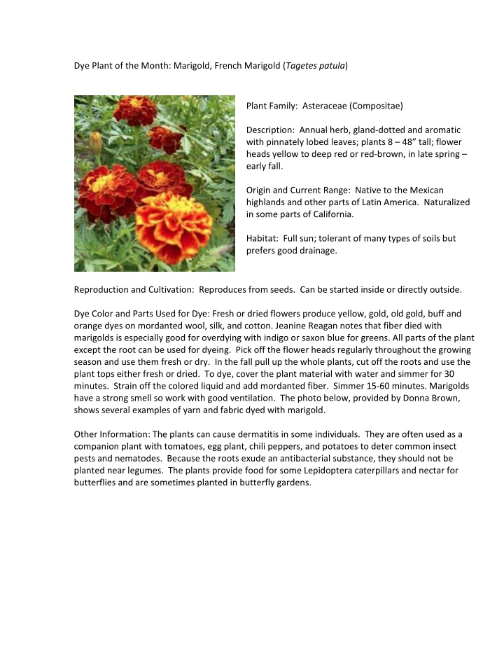 dye plant of the month marigold french marigold