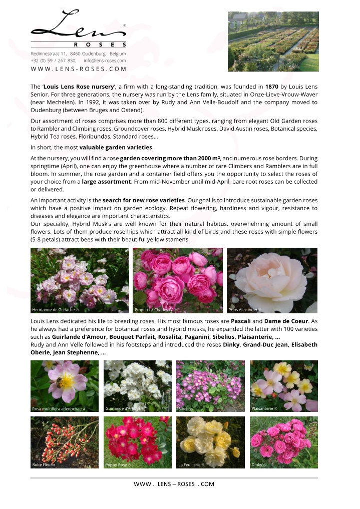 the louis lens rose nursery a firm with a long